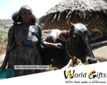Afera from Ethiopia with her cow