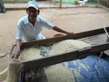 Sifting the corn to remove unwanted bits